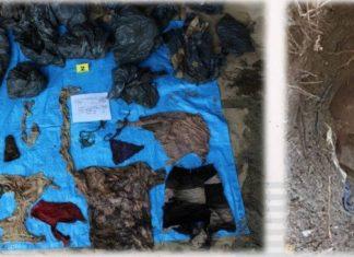 Abominable, encuentran 166 cadáveres en varias fosas comunes en México