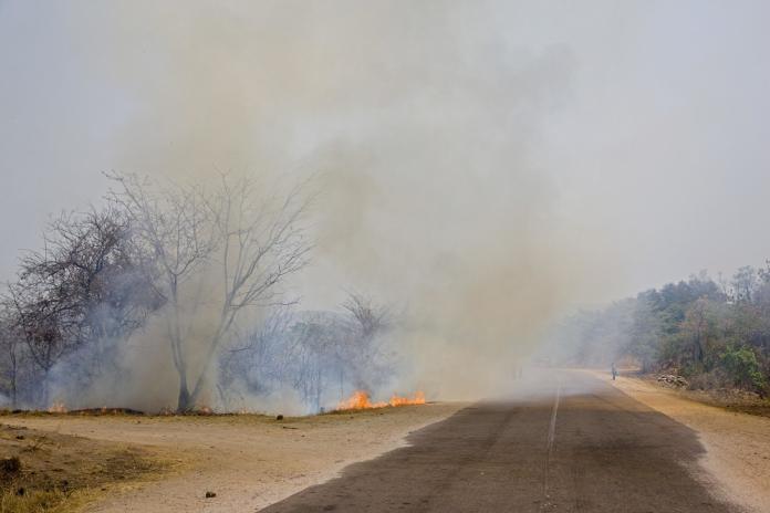 Incendios en el Amazonas: Hay más incendios en África que en Brasil